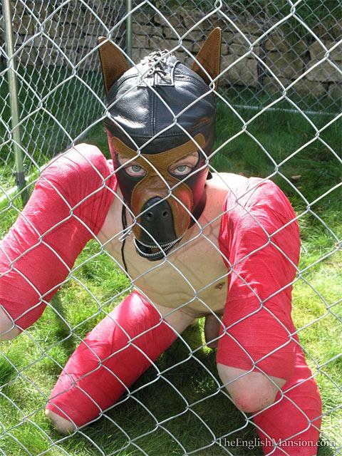 puppy-play-human-dog.jpg